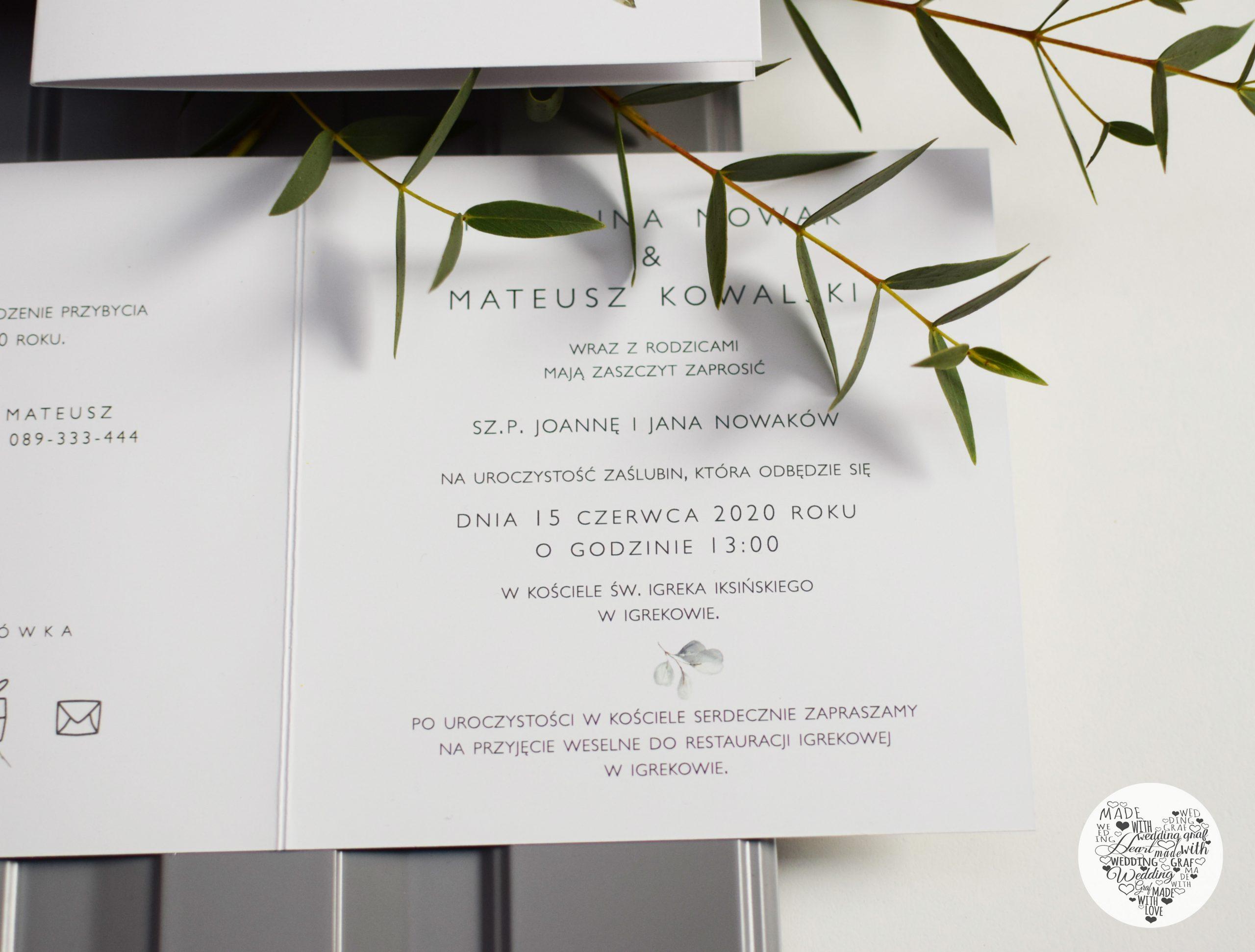 Eukaliptus 06